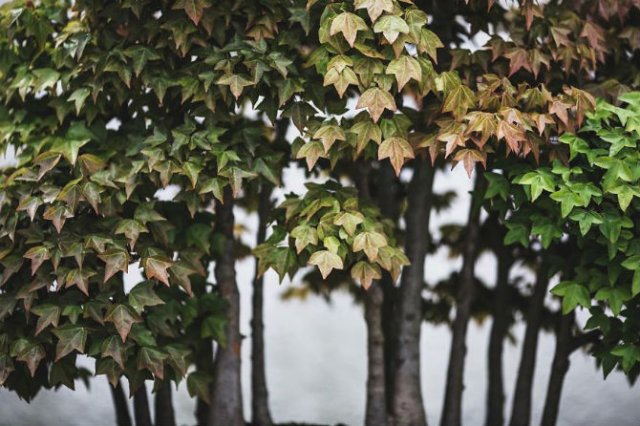 Unicitatea bonsailor, intr-un pictorial superb - Poza 4