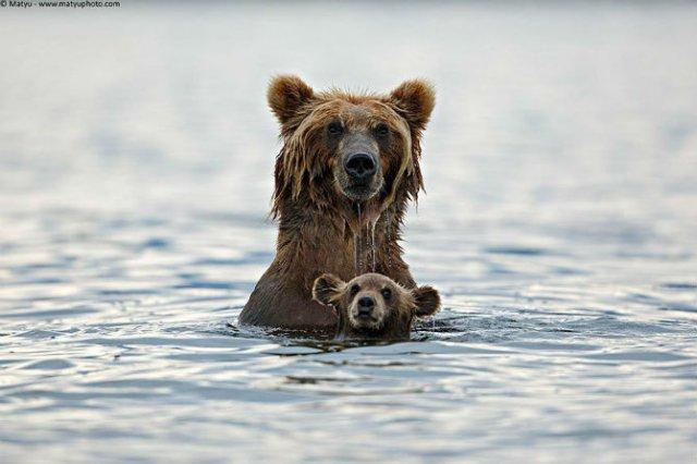 Lumea animalelor, in poze de familie - Poza 9