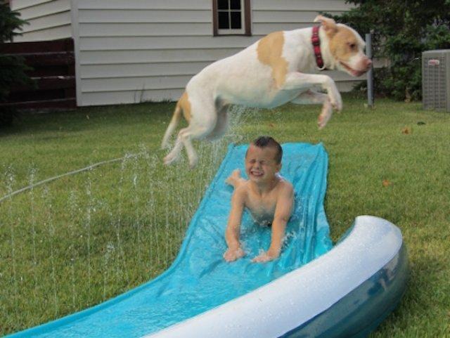 Cei mai trasniti caini si vara lor de neuitat - Poza 10