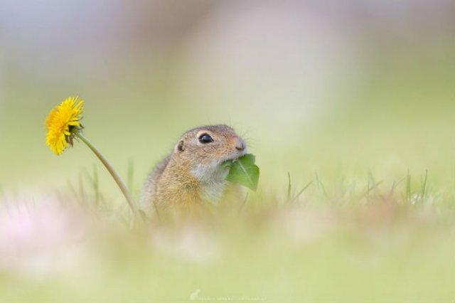 Rozatoare adorabile, intr-un pictorial haios - Poza 14