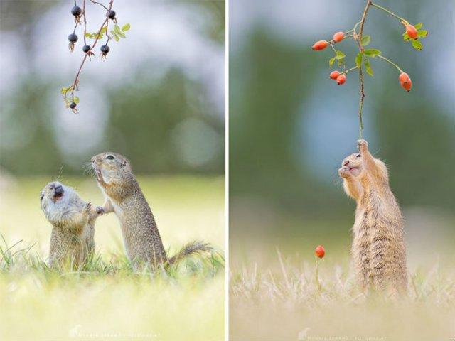 Rozatoare adorabile, intr-un pictorial haios - Poza 15