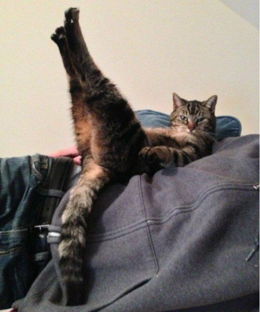 20+ Poze amuzante cu pisici naravase - Poza 8
