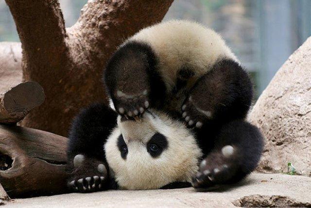 Cele mai haioase poze cu animale - Poza 11