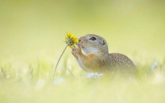 Rozatoare adorabile, intr-un pictorial haios - Poza 10