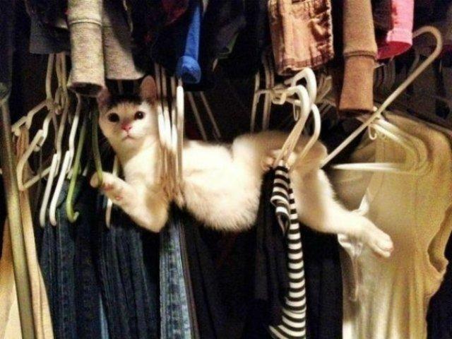 20+ Poze amuzante cu pisici naravase - Poza 3