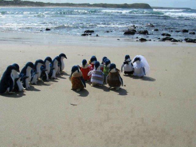 Momente haioase de pe litoral, in imagini savuroase - Poza 5