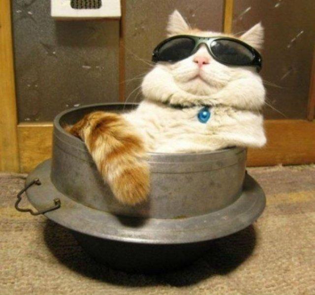 20+ Poze amuzante cu pisici naravase - Poza 7