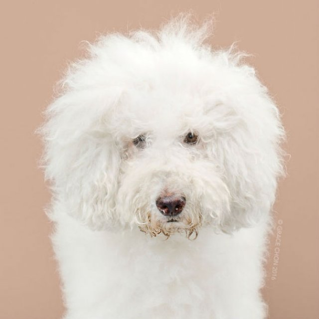 Unul mai cochet ca altul: Tunsori canine cu influente asiatice - Poza 11