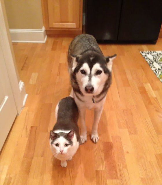 Cele mai bizare asemanari intre animale - Poza 9