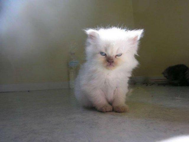 20+ Poze amuzante cu pisici naravase - Poza 5