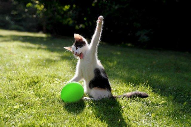 20+ Poze amuzante cu pisici naravase - Poza 6