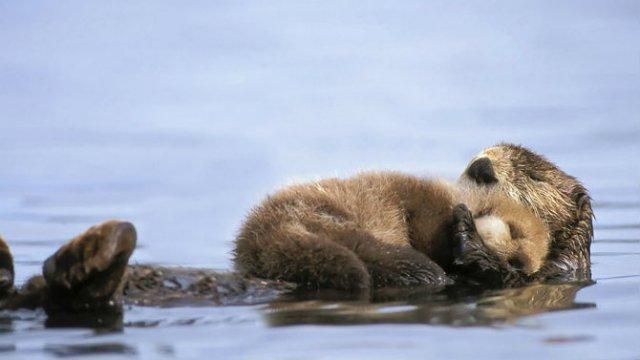 Lumea animalelor, in poze de familie - Poza 8