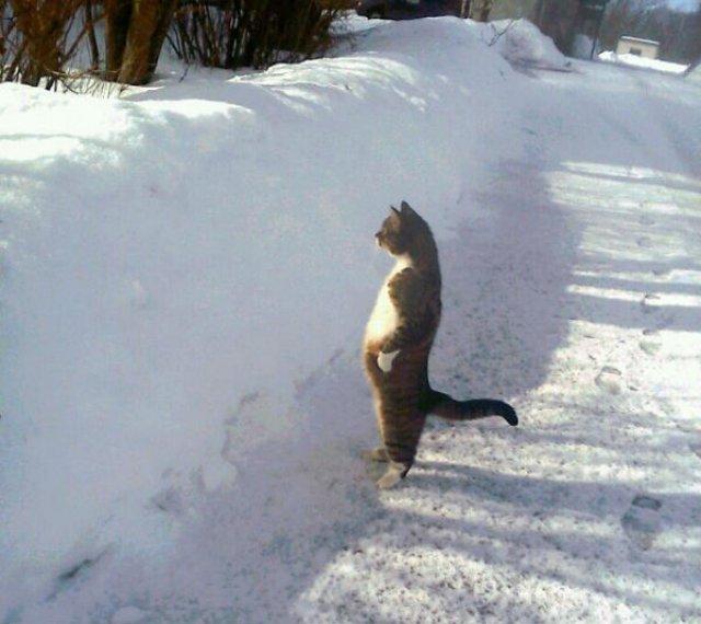 20+ Poze amuzante cu pisici naravase - Poza 2