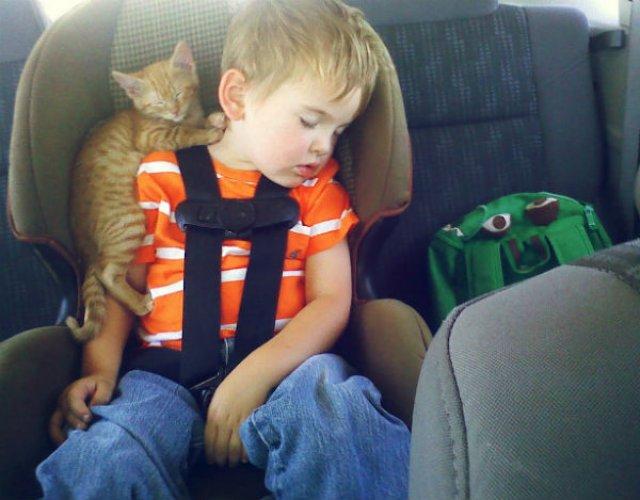 20+ Poze amuzante cu pisici naravase - Poza 4