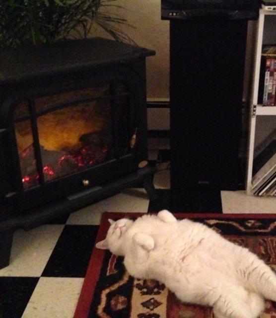 Poze haioase cu pisici neastamparate - Poza 14