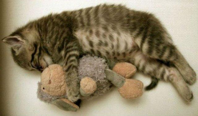 20+ Poze amuzante cu pisici naravase - Poza 21