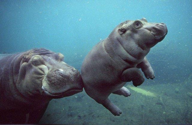 Cele mai simpatice animale zambarete - Poza 10