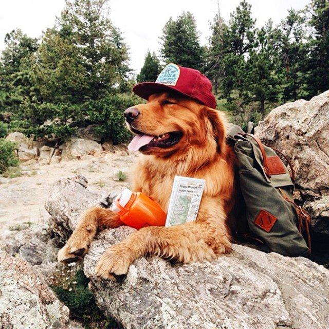 Aventurile epice ale lui Aspen, retrieverul hoinar - Poza 14