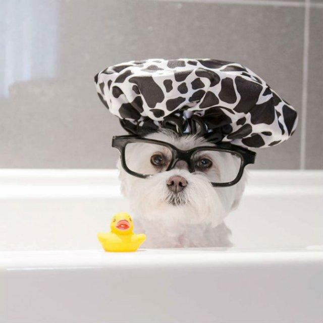 O lectie de stil de la cel mai cochet Bichon - Poza 15