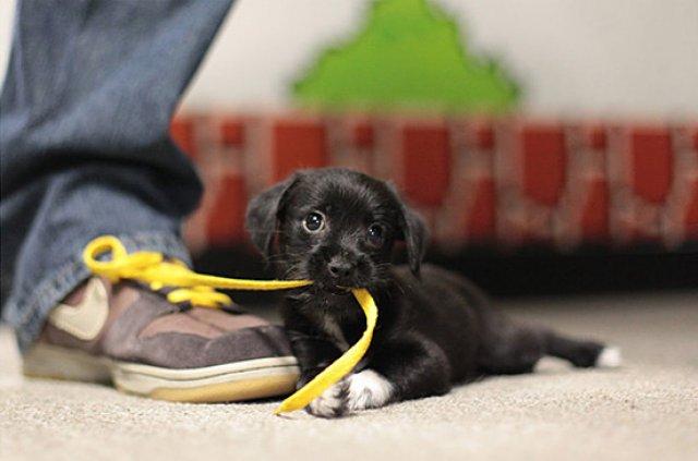 Unele mai dragalase ca altele: 14 Poze cu animale adorabile - Poza 9