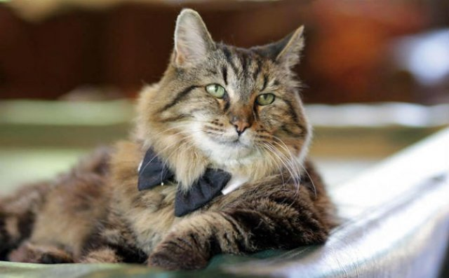Corduroy, cea mai in varsta pisica din lume - Poza 1
