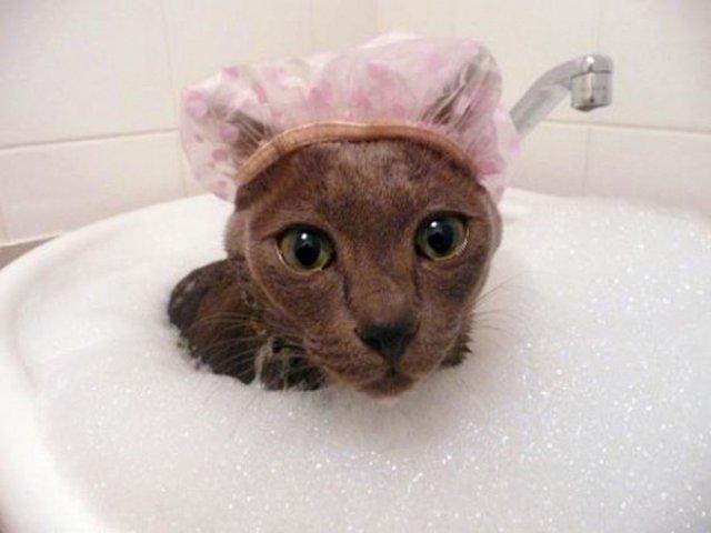 Pisici la apa, in poze haioase - Poza 4