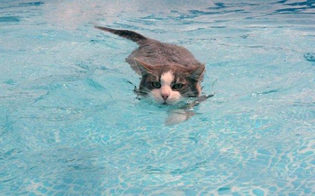 Pisici la apa, in poze haioase - Poza 5