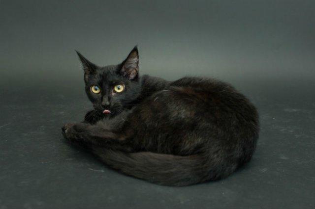 Proiectul pisicii negre: Cele mai frumoase pisicute fara stapan - Poza 10