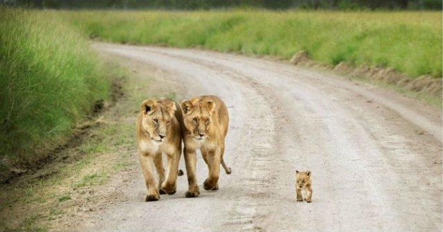 Lumea animalelor, in poze de familie - Poza 3