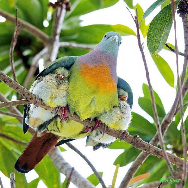 Lumea animalelor, in poze de familie - Poza 7