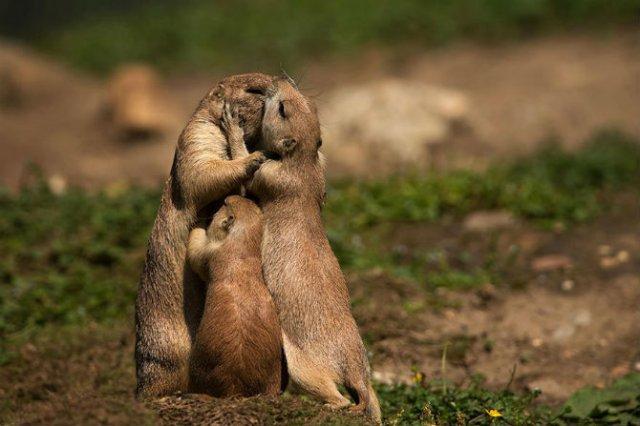 Lumea animalelor, in poze de familie - Poza 5