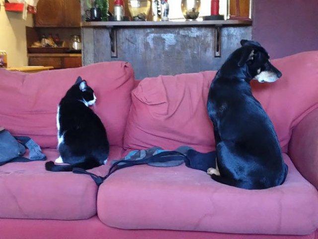 Cele mai bizare asemanari intre animale - Poza 8