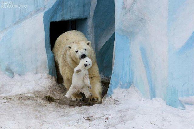 Lumea animalelor, in poze de familie - Poza 1