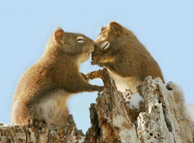 Dragostea pluteste in aer: Tandrete in lumea animala - Poza 12