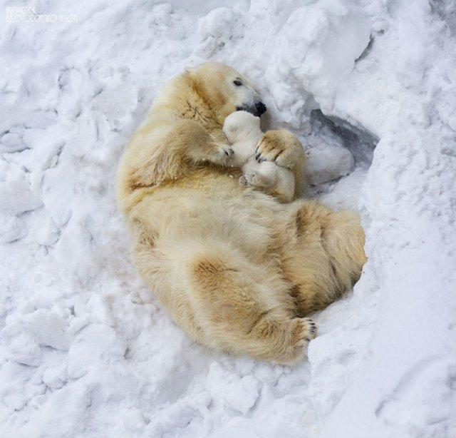 Lumea animalelor, in poze de familie - Poza 2