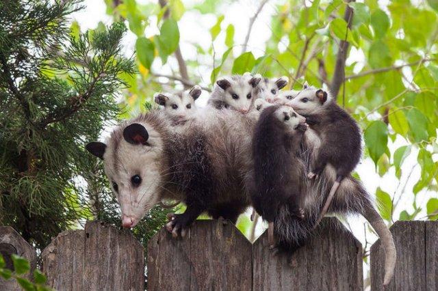 Lumea animalelor, in poze de familie - Poza 4