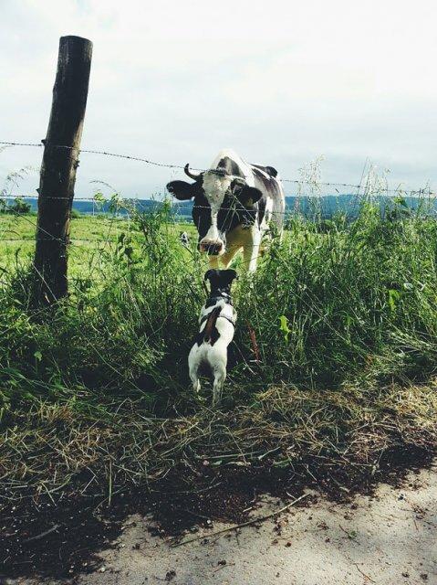 Cele mai bizare asemanari intre animale - Poza 7