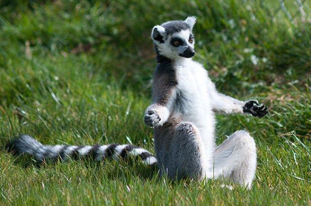 Cele mai haioase poze cu animale - Poza 10