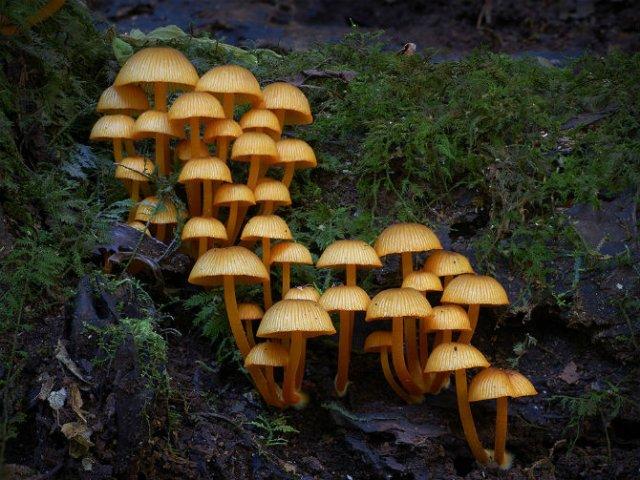 Cele mai ciudate ciuperci din lume - Poza 10