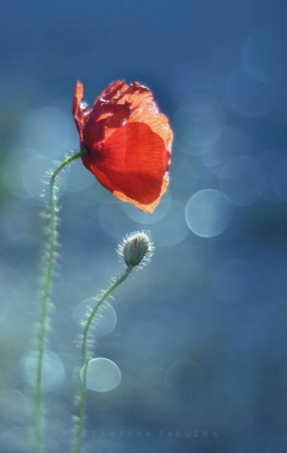 Florile ochilor mei: Picturi din sanul naturii - Poza 12