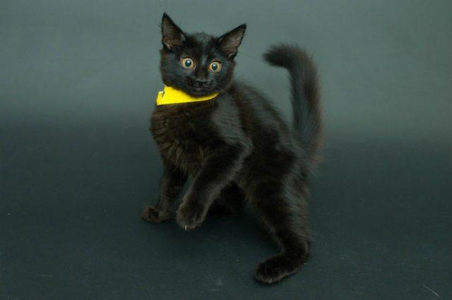 Proiectul pisicii negre: Cele mai frumoase pisicute fara stapan - Poza 9