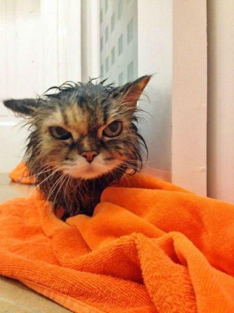 Poze haioase cu pisici expresive - Poza 13