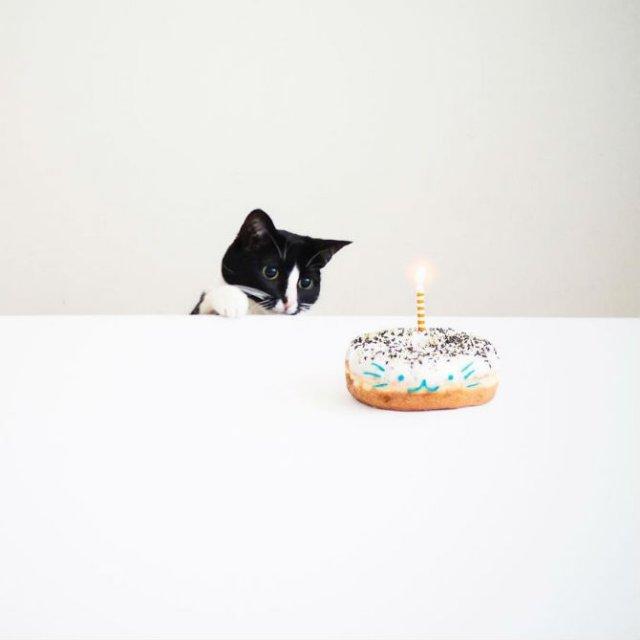 Cheeto, o pisica haioasa, intr-un pictorial trasnit - Poza 19