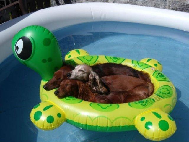 Cei mai trasniti caini si vara lor de neuitat - Poza 22