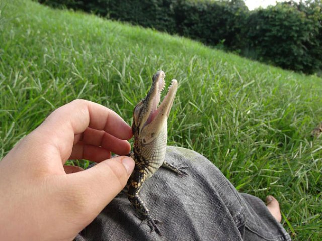 Cele mai simpatice animale zambarete - Poza 9