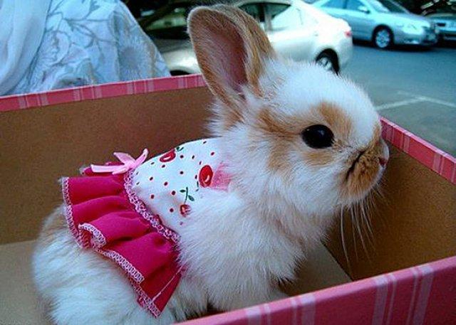 Unele mai dragalase ca altele: 14 Poze cu animale adorabile - Poza 2