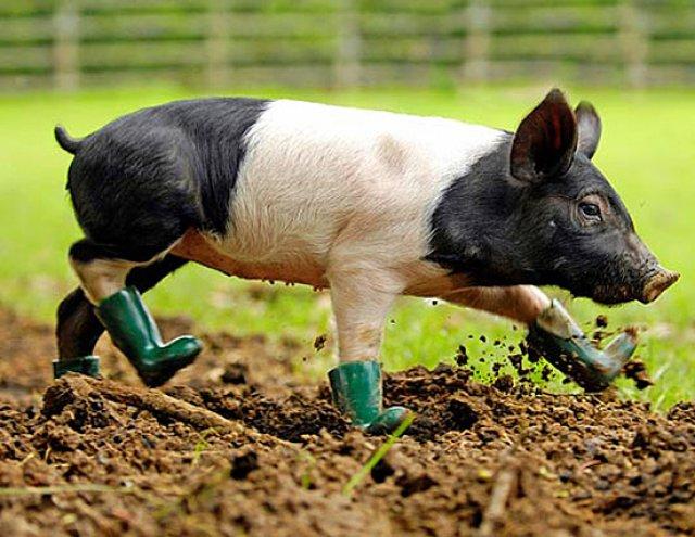 Unele mai dragalase ca altele: 14 Poze cu animale adorabile - Poza 4