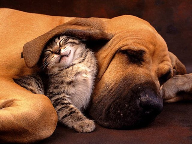 Unele mai dragalase ca altele: 14 Poze cu animale adorabile - Poza 5