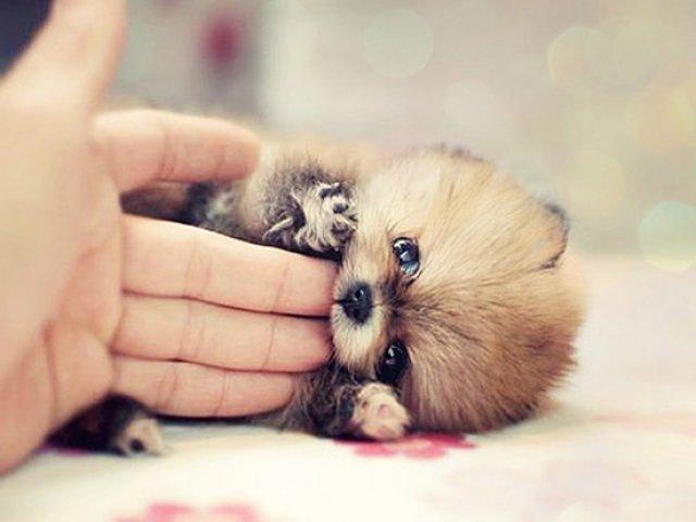 Unele mai dragalase ca altele: 14 Poze cu animale adorabile - Poza 6
