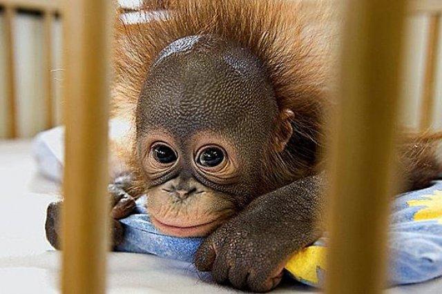 Unele mai dragalase ca altele: 14 Poze cu animale adorabile - Poza 7